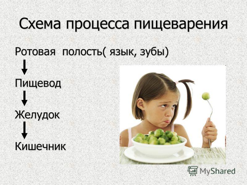 Схема процесса пищеварения Ротовая полость( язык, зубы) ПищеводЖелудокКишечник