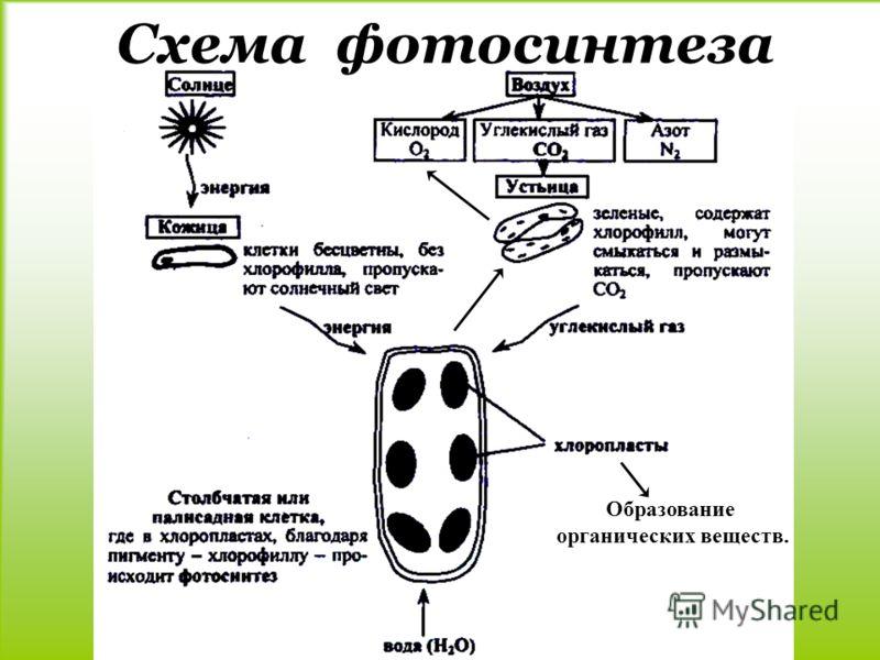Части растений картинки схема фото 55
