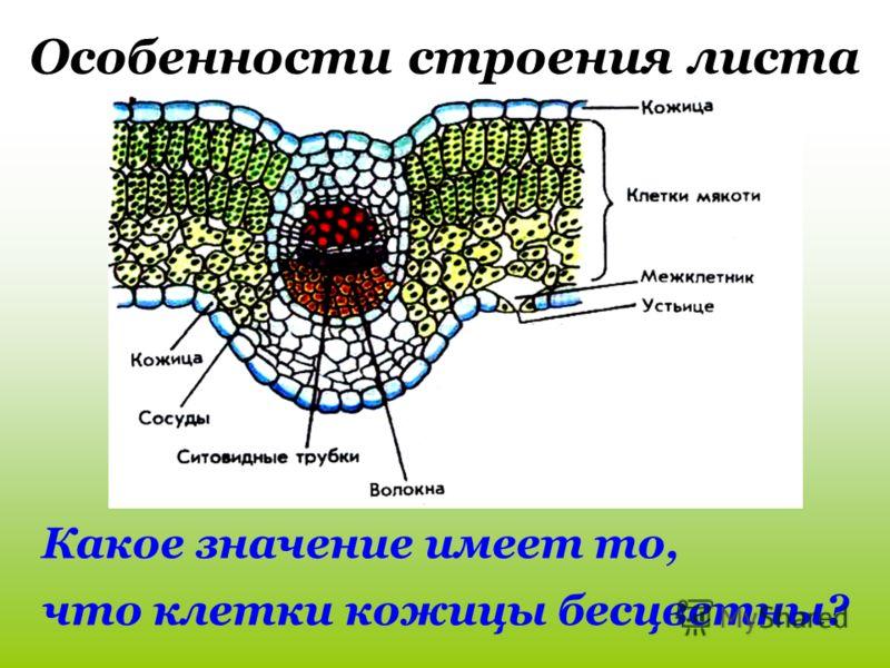 Схема образования связи в молекулах фото 78