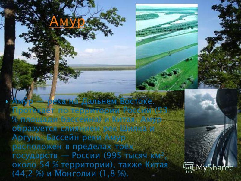 Аму́р река на Дальнем Востоке. Протекает по территории России (53 % площади бассейна) и Китая. Амур образуется слиянием рек Шилка и Аргунь. Бассейн реки Амур расположен в пределах трёх государств России (995 тысяч км², около 54 % территории), также К