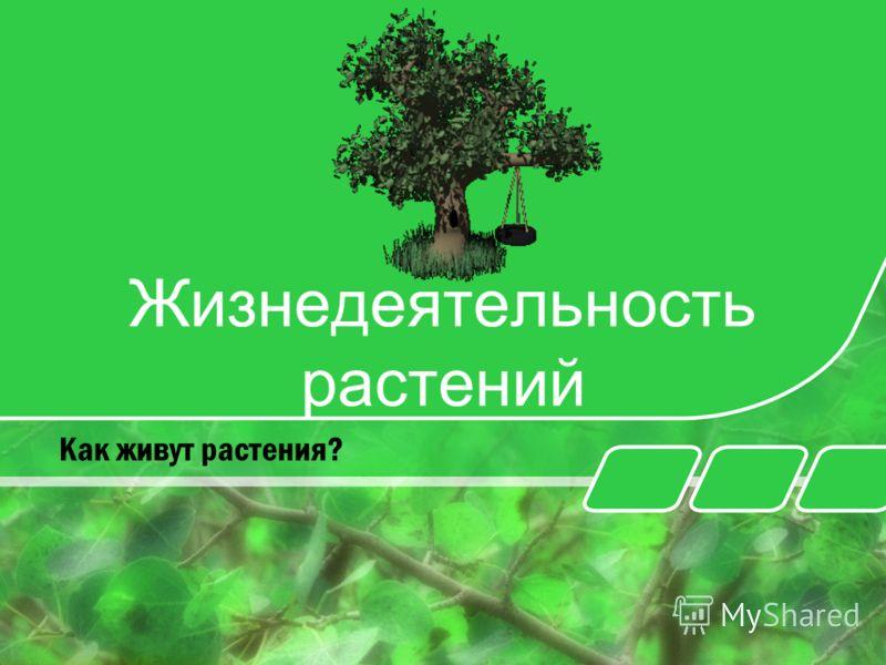 Жизнедеятельность растений Как живут растения?
