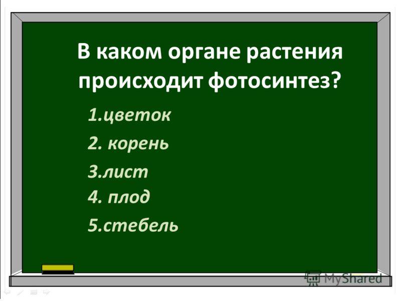 В каком органе растения происходит фотосинтез? 1.цветок 2. корень 3.лист 4. плод 5.стебель