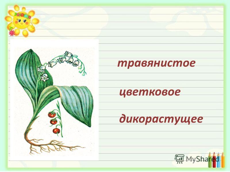 травянистое цветковое дикорастущее