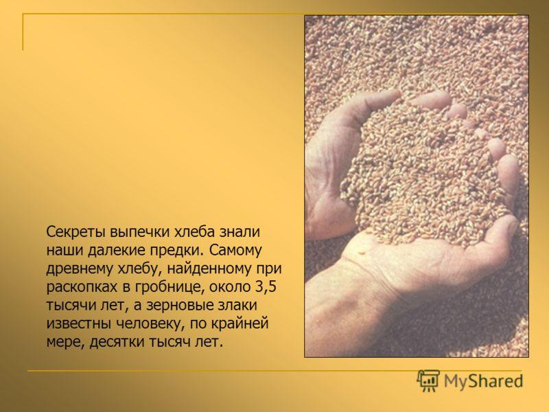 Секреты выпечки хлеба знали наши далекие предки. Самому древнему хлебу, найденному при раскопках в гробнице, около 3,5 тысячи лет, а зерновые злаки известны человеку, по крайней мере, десятки тысяч лет.