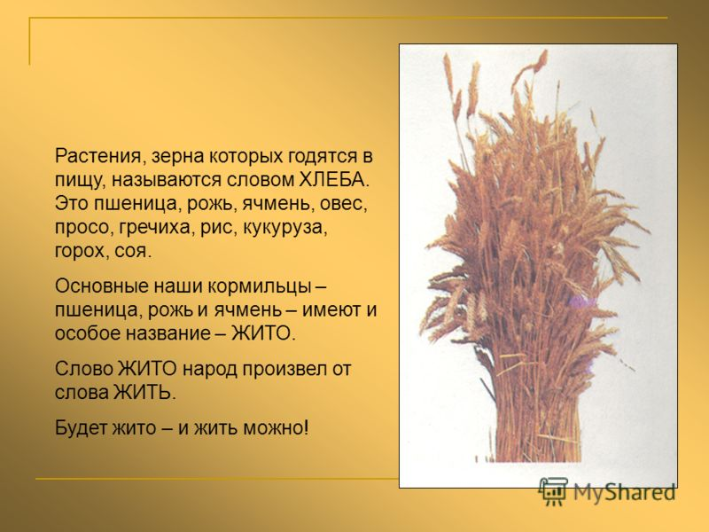 Растения, зерна которых годятся в пищу, называются словом ХЛЕБА. Это пшеница, рожь, ячмень, овес, просо, гречиха, рис, кукуруза, горох, соя. Основные наши кормильцы – пшеница, рожь и ячмень – имеют и особое название – ЖИТО. Слово ЖИТО народ произвел