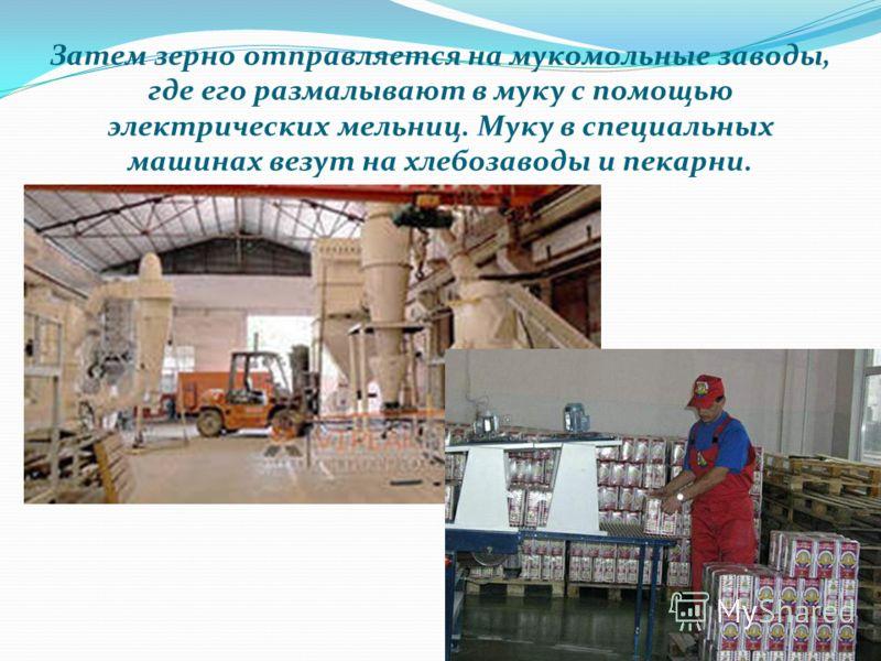 Затем зерно отправляется на мукомольные заводы, где его размалывают в муку с помощью электрических мельниц. Муку в специальных машинах везут на хлебозаводы и пекарни.