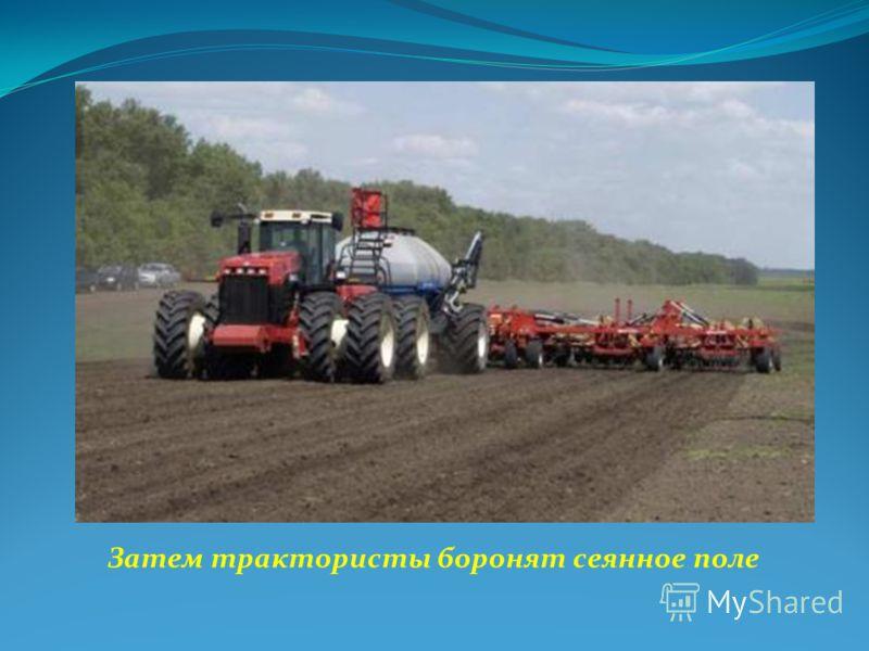 Затем трактористы боронят сеянное поле