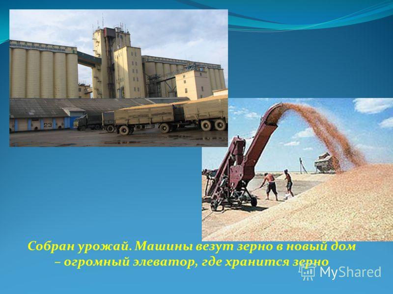 Собран урожай. Машины везут зерно в новый дом – огромный элеватор, где хранится зерно