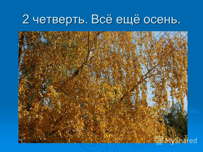 2 четверть. Всё ещё осень.