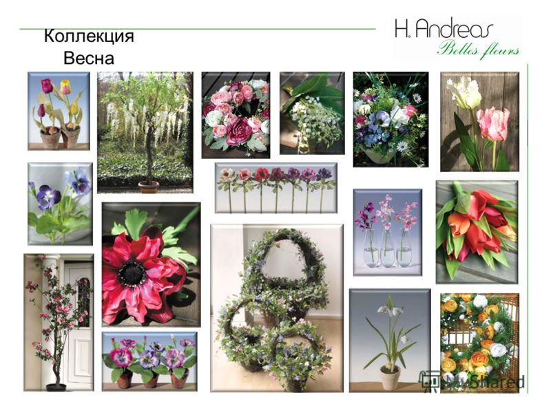 Коллекция Весна