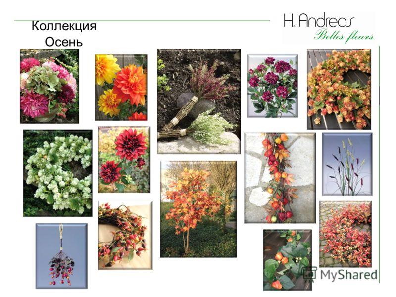 Коллекция Осень