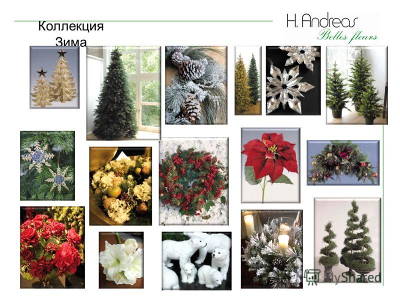 Коллекция Зима