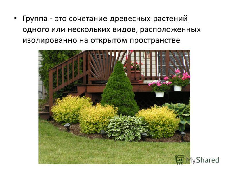 Группа - это сочетание древесных растений одного или нескольких видов, расположенных изолированно на открытом пространстве