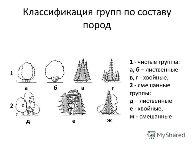 Классификация групп по составу пород 1 - чистые группы: а, б – лиственные в, г - хвойные; 2 - смешанные группы: д – лиственные е - хвойные, ж - смешанные 1 2 абвг д е ж