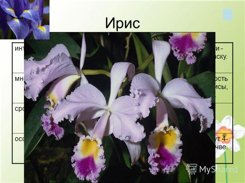 Ирис интересные фактыНазван в честь богини радуги - Ириды за свою богатую окраску. многообразиеОколо 300 видов. Популярность у садоводов - бородатые ирисы, создано около 35000 сортов. сроки цветенияВ северных широтах цветёт летом. особенностиНа одном