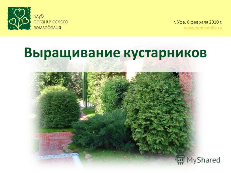 г. Уфа, 6 февраля 2010 г. www.zemledelie.ru Выращивание кустарников