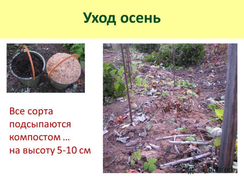 Уход осень Все сорта подсыпаются компостом … на высоту 5-10 см