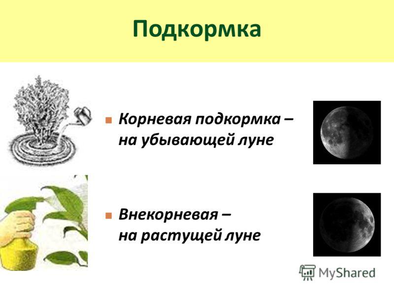 Подкормка Корневая подкормка – на убывающей луне Внекорневая – на растущей луне