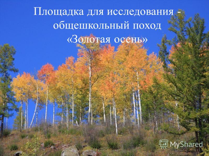 Площадка для исследования - общешкольный поход «Золотая осень»