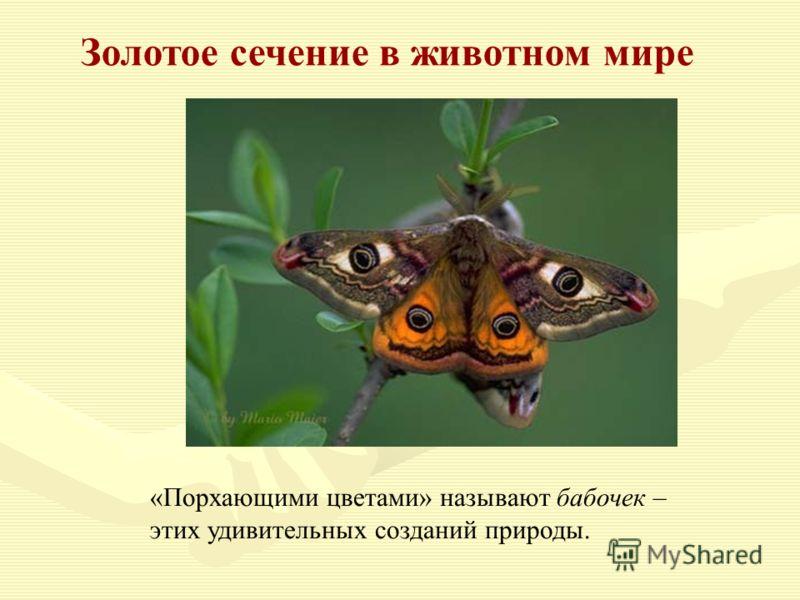 Золотое сечение в животном мире «Порхающими цветами» называют бабочек – этих удивительных созданий природы.