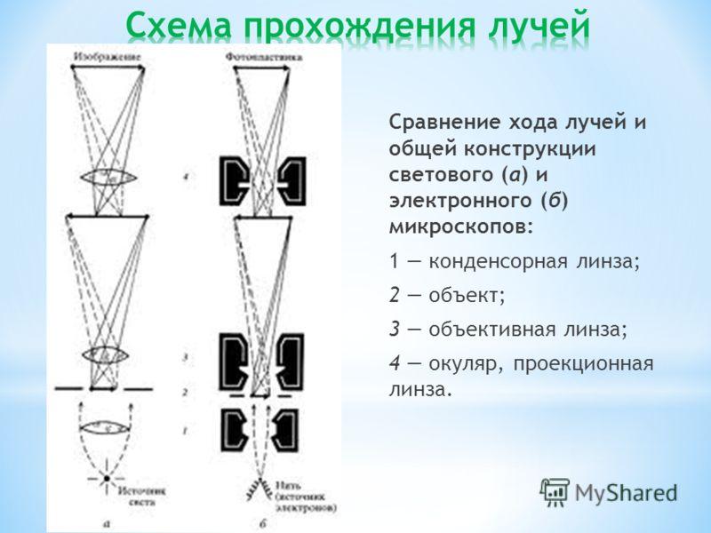 Сравнение хода лучей и общей конструкции светового (а) и электронного (б) микроскопов: 1 конденсорная линза; 2 объект; 3 объективная линза; 4 окуляр, проекционная линза.