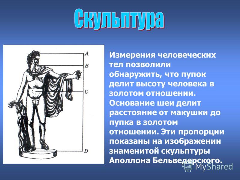 Измерения человеческих тел позволили обнаружить, что пупок делит высоту человека в золотом отношении. Основание шеи делит расстояние от макушки до пупка в золотом отношении. Эти пропорции показаны на изображении знаменитой скульптуры Аполлона Бельвед