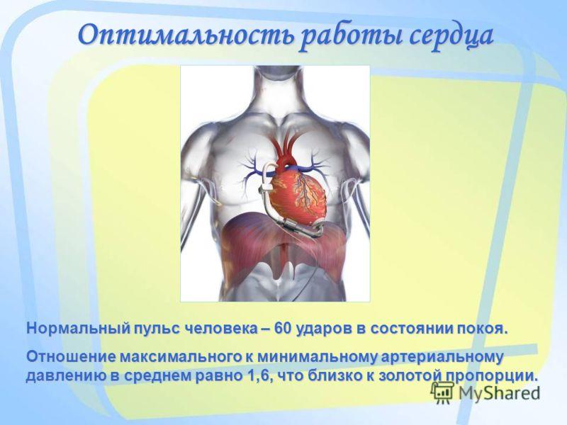 Оптимальность работы сердца Нормальный пульс человека – 60 ударов в состоянии покоя. Отношение максимального к минимальному артериальному давлению в среднем равно 1,6, что близко к золотой пропорции.