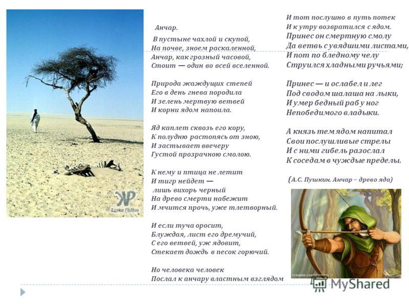 Анчар. В пустыне чахлой и скупой, На почве, зноем раскаленной, Анчар, как грозный часовой, Стоит один во всей вселенной. Природа жаждущих степей Его в день гнева породила И зелень мертвую ветвей И корни ядом напоила. Яд каплет сквозь его кору, К полу