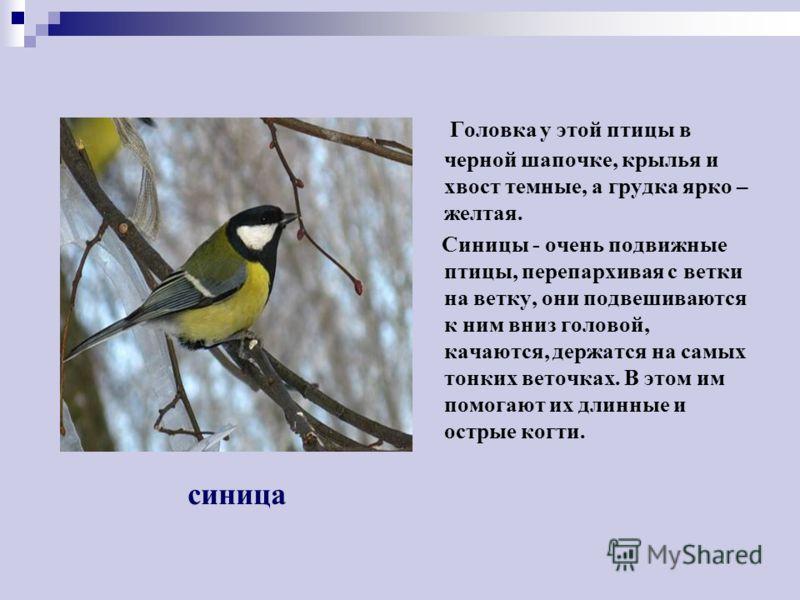 ЗИМУЮЩИЕ ПТИЦЫ ЗИМУЮЩИЕ ПТИЦЫ Это маленькая подвижная птичка с округлой головкой, короткой шеей, яйцевидным туловищем, короткими и округлыми крыльями. Клюв твердый, к концу заостренный. В холодную пору птицы сидят, плотно прижавшись, друг к другу, на