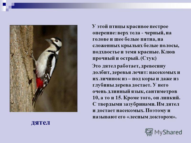 Головка у этой птицы в черной шапочке, крылья и хвост темные, а грудка ярко – желтая. Синицы - очень подвижные птицы, перепархивая с ветки на ветку, они подвешиваются к ним вниз головой, качаются, держатся на самых тонких веточках. В этом им помогают