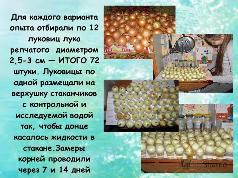 Для каждого варианта опыта отбирали по 12 луковиц лука репчатого диаметром 2,5-3 см ИТОГО 72 штуки. Луковицы по одной размещали на верхушку стаканчиков с контрольной и исследуемой водой так, чтобы донце касалось жидкости в стакане.Замеры корней прово