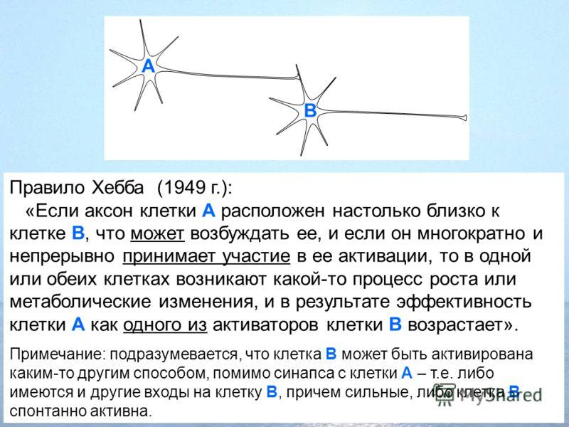Правило Хебба (1949 г.): «Если аксон клетки А расположен настолько близко к клетке В, что может возбуждать ее, и если он многократно и непрерывно принимает участие в ее активации, то в одной или обеих клетках возникают какой-то процесс роста или мета