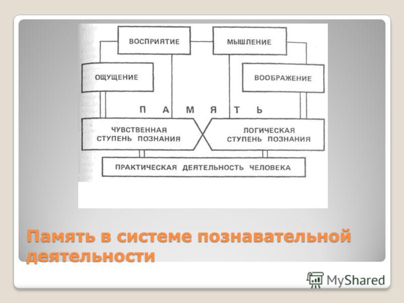 Память в системе познавательной деятельности