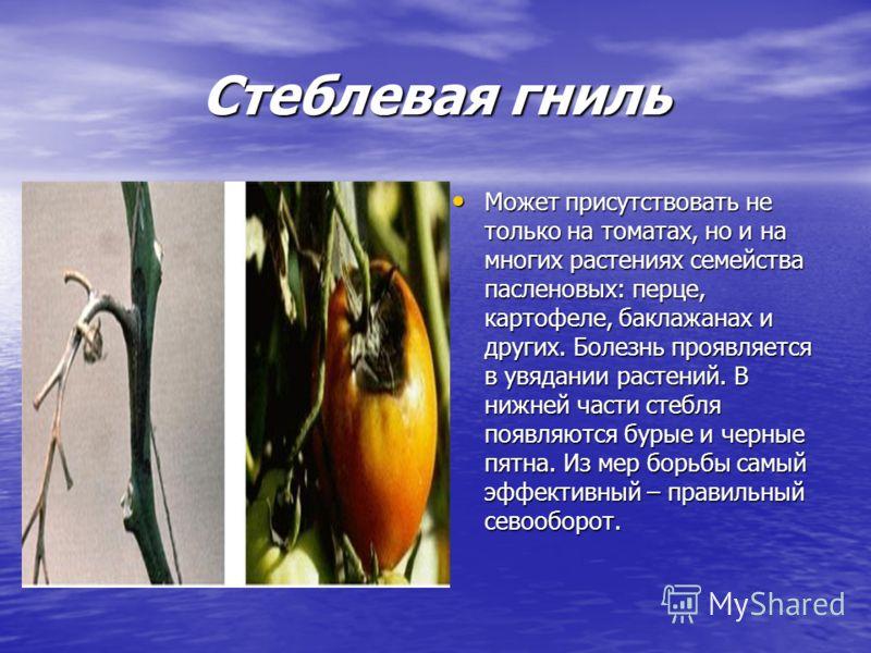 Стеблевая гниль Может присутствовать не только на томатах, но и на многих растениях семейства пасленовых: перце, картофеле, баклажанах и других. Болезнь проявляется в увядании растений. В нижней части стебля появляются бурые и черные пятна. Из мер бо