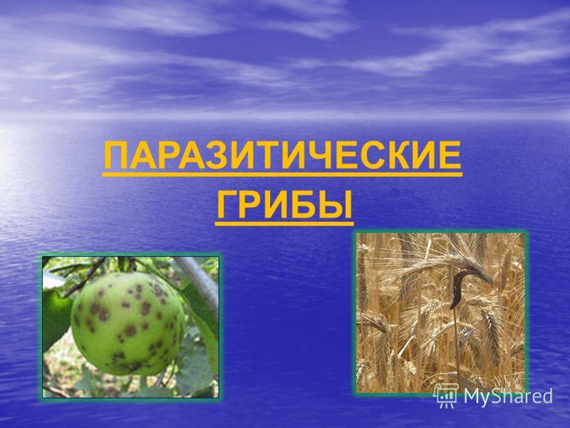 ГРИБЫ ПАРАЗИТИЧЕСКИЕ