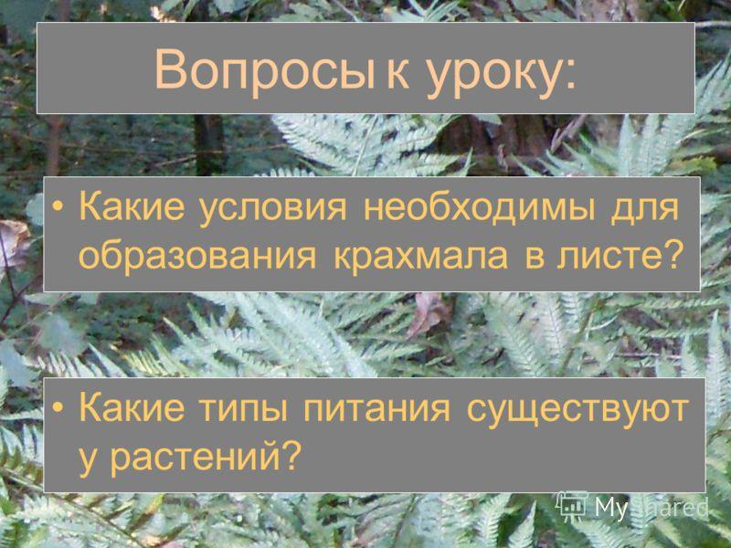 Вопросы к уроку: Какие условия необходимы для образования крахмала в листе? Какие типы питания существуют у растений?