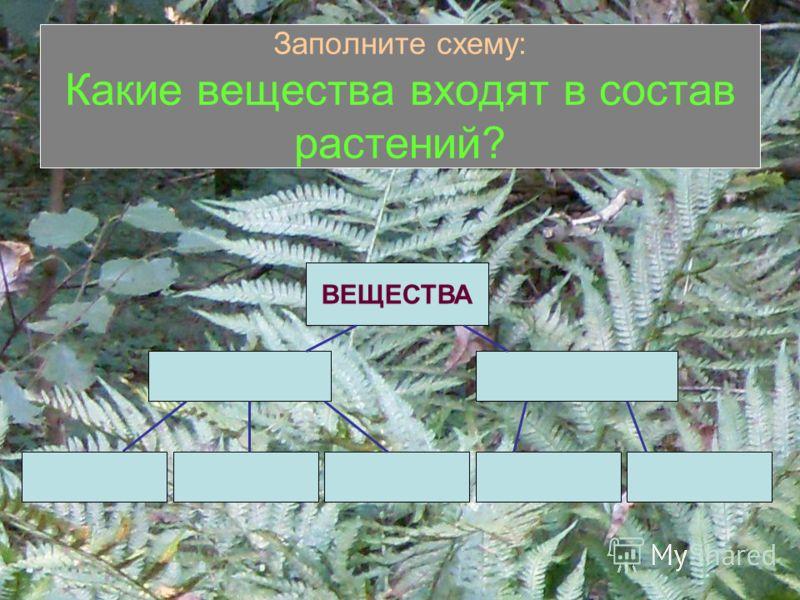 Заполните схему: Какие вещества входят в состав растений? ВЕЩЕСТВА