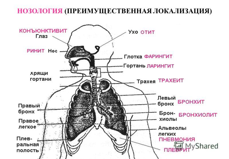 Нозология фото