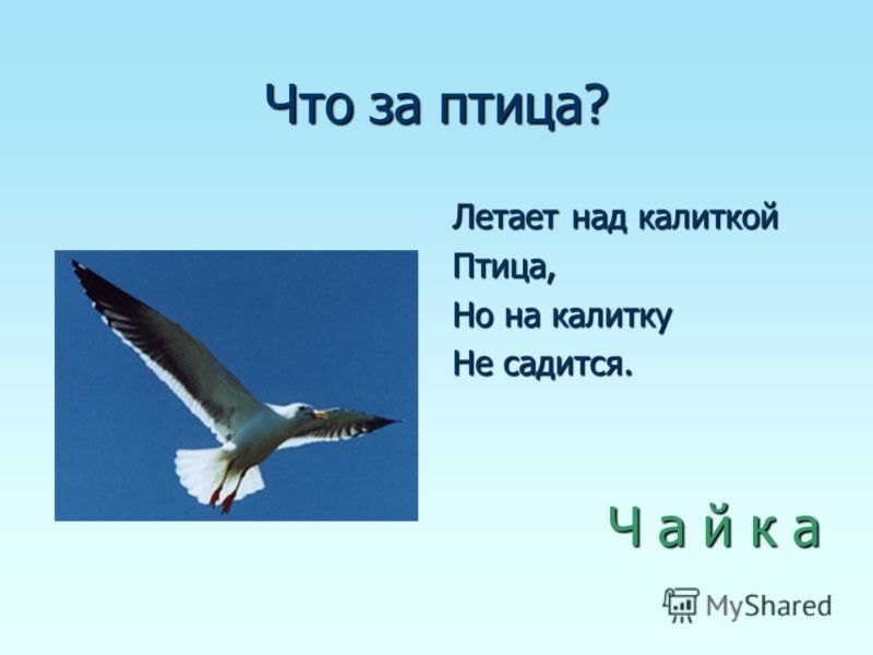 Что за птица? Летает над калиткой Птица, Но на калитку Не садится. Ч а й к а