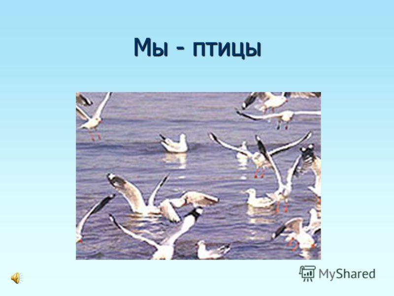 Мы - птицы