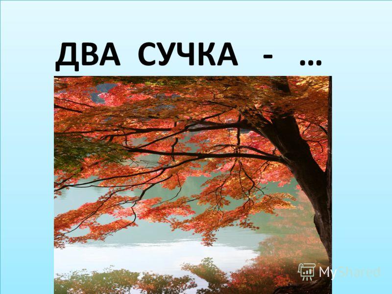 ДВА СУЧКА - …