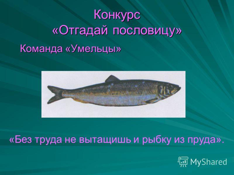 Конкурс «Отгадай пословицу» Команда «Умельцы» Команда «Умельцы» «Без труда не вытащишь и рыбку из пруда».