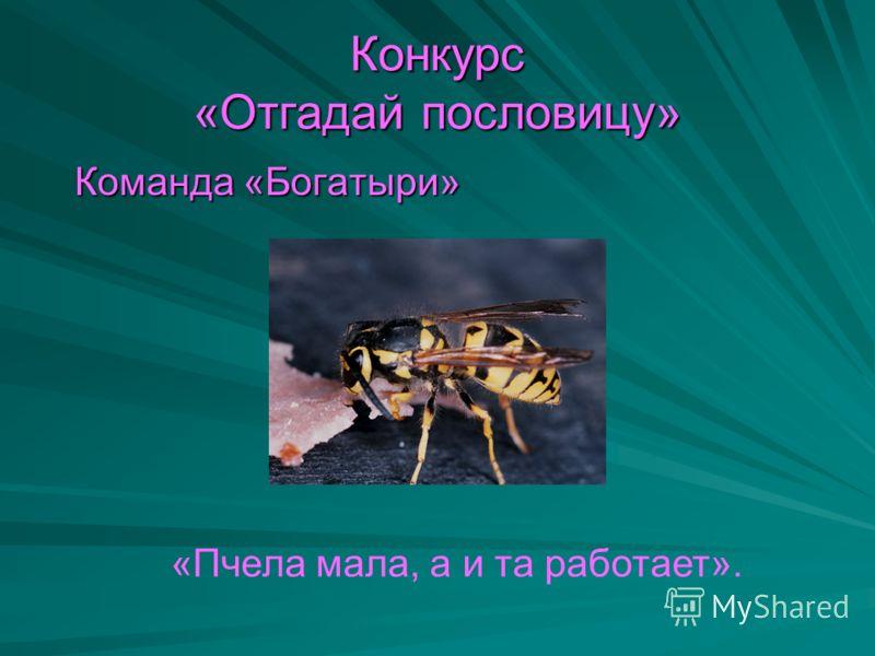 Конкурс «Отгадай пословицу» Команда «Богатыри» Команда «Богатыри» «Пчела мала, а и та работает».