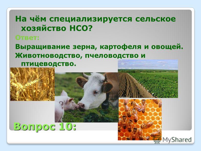 Вопрос 10: На чём специализируется сельское хозяйство НСО? Ответ: Выращивание зерна, картофеля и овощей. Животноводство, пчеловодство и птицеводство.