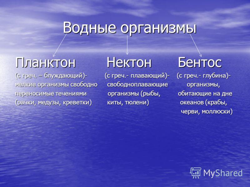 Водные организмы Водные организмы Планктон Нектон Бентос (с греч. – блуждающий)- (с греч.- плавающий)- (с греч.- глубина)- мелкие организмы свободно свободноплавающие организмы, переносимые течениями организмы (рыбы, обитающие на дне (рачки, медузы,