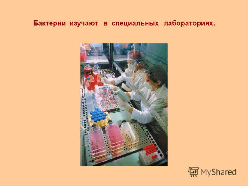 Бактерии изучают в специальных лабораториях.