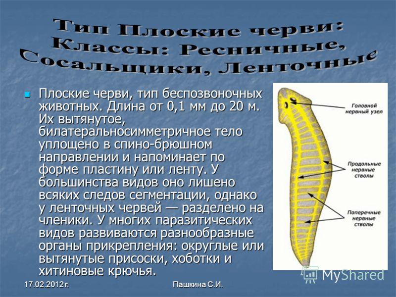 Плоские черви, тип беспозвоночных животных. Длина от 0,1 мм до 20 м. Их вытянутое, билатеральносимметричное тело уплощено в спино-брюшном направлении и напоминает по форме пластину или ленту. У большинства видов оно лишено всяких следов сегментации,