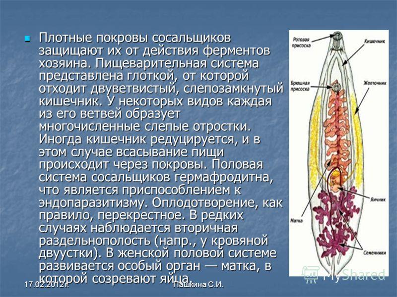 Плотные покровы сосальщиков защищают их от действия ферментов хозяина. Пищеварительная система представлена глоткой, от которой отходит двуветвистый, слепозамкнутый кишечник. У некоторых видов каждая из его ветвей образует многочисленные слепые отрос