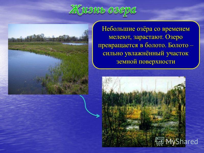 Небольшие озёра со временем мелеют, зарастают. Озеро превращается в болото. Болото – сильно увлажнённый участок земной поверхности