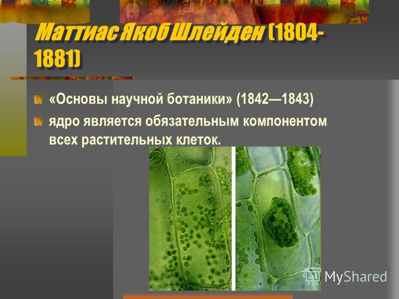 Маттиас Якоб Шлейден (1804- 1881) «Основы научной ботаники» (18421843) ядро является обязательным компонентом всех растительных клеток.